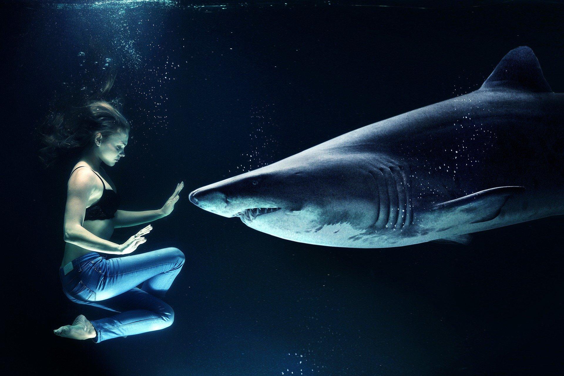 Sensibel? Zeig es den Haien da draußen!
