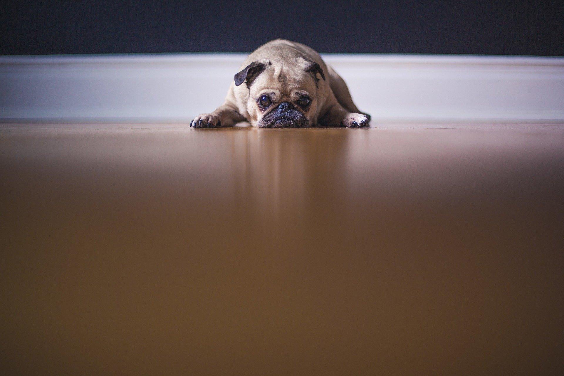 Fühlst du dich auch gerade so wie der Hund? Diese 30 Tipps helfen dir gegen deine Corona-Langeweile!